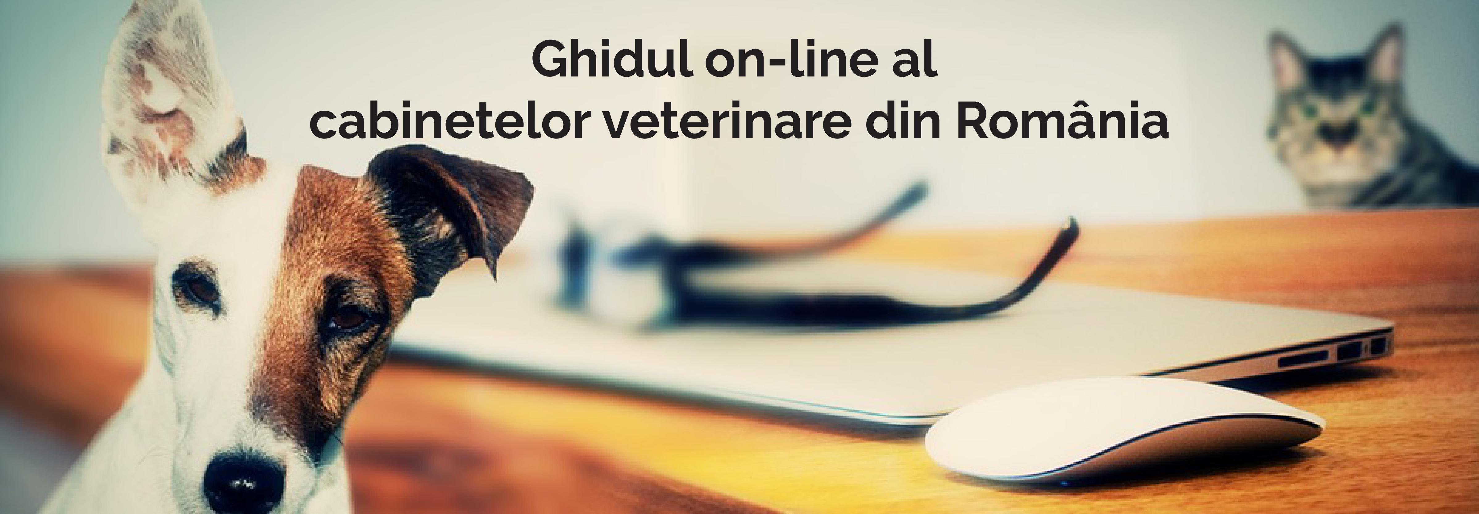 banner-ghidul-veterinarului-v2-1ok